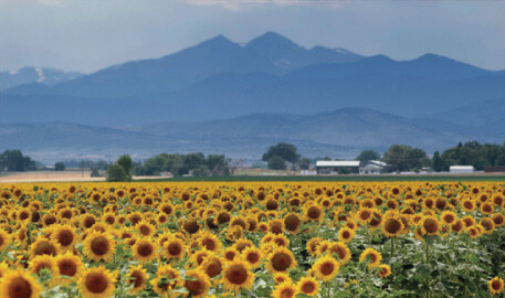 Berthoud Colorado Scenic Mountain and Sunflower field Image